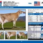 catalogo-touros_page_37