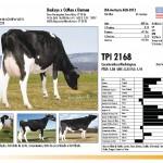 prova-final-catalogo-2013_page_11