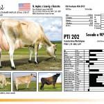 prova-final-catalogo-2013_page_28