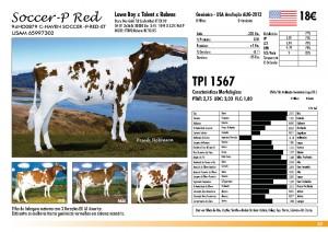 prova-final-catalogo-2013_page_33